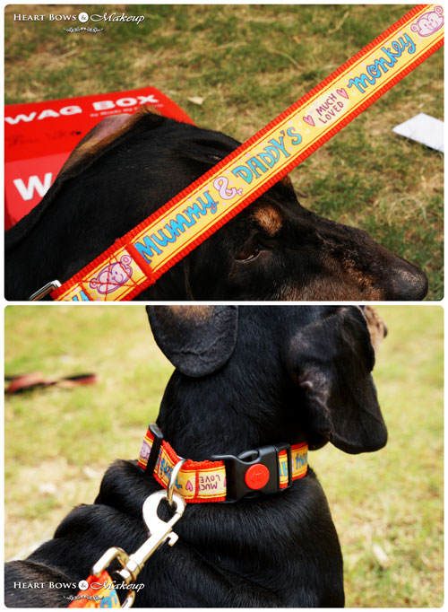 Cute Dog Leashes Online India Heads Up For Tails