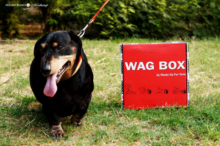 Wag Box By Heads Up For Tails Review Price Products