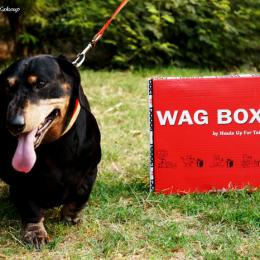 Wag Box By Heads Up For Tails Review, Products & Price